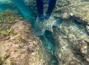 Woede om toerist die op schildpad gaat staan
