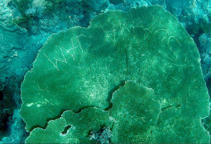 Toeristen krassen hun naam in oeroud koraal. Schande..!