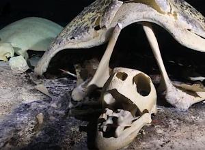 Duiken in een schildpaddengraf