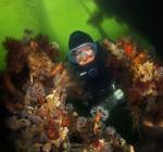 Nieuwe gebiedsvisie Veerse Meer met oog voor duikers