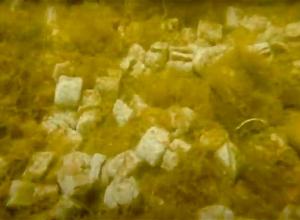 Illegale vuilstort in duikstek Vervallen Haven