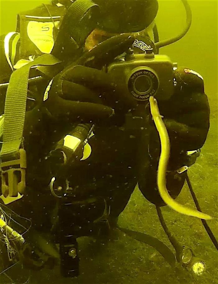 Duikers reageren verbaasd op het merkwaardige gedrag van deze paling