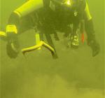 Duikers spotten opnieuw zieke paling. Dit keer in Blijkpolder