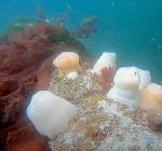Edmonds Underwater Park. Een fenomeen van en voor duikers