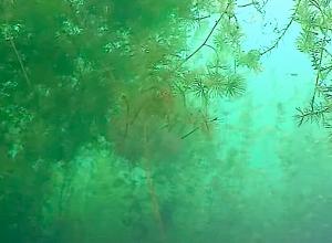 Er vormen zich weer plantengrotten in de Put van Ekeren