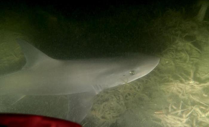 Duikers spotten haai bij Wemeldinge