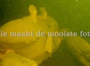 Dive Post Zoetermeer heeft een leuke prijs voor jou!