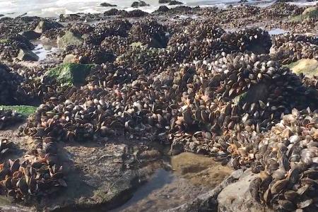 Persoon aangetroffen met 500 kilo illegaal geraapte oesters bij Sint-Annaland