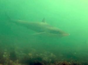 Duikers spotten haai bij Goese Sas