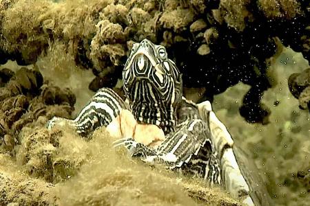 De schildpad van Pol Parking