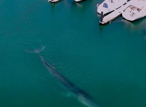 Walvis zwemt jachthaven Valencia binnen