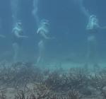 Vernieling koraalaanplant Marie Pampoen heeft te maken met zakelijk geschil