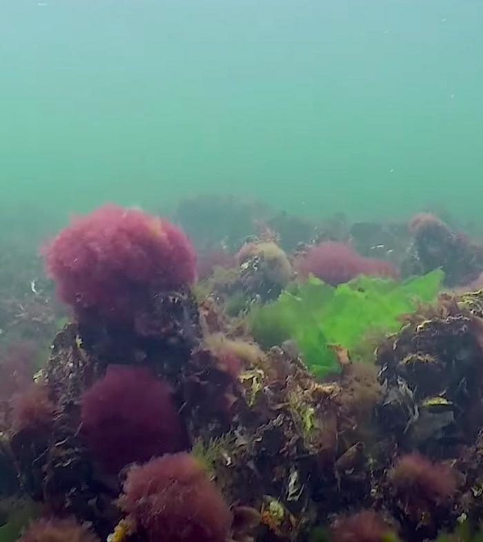 Zorgen over waterkwaliteit Veerse Meer
