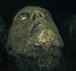 Bepaal mede de 10 bekendste duikobjecten