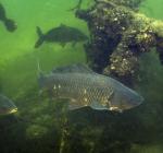 Behoud het Haarlemmermeerse bos als duikstek in Noord-Holland!