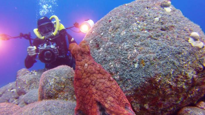 Octopus (be)spot onderwaterfotograaf
