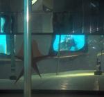 Duikers ontdekken stripclub onderwater
