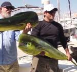 Zeeleeuw steelt vis